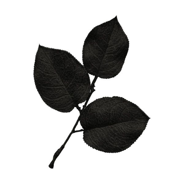 Jss Oohhlala Rose Leaves 1 Black Png Liked On Polyvore Featuring Flowers Black Leaves Backgrounds And Foliage Rose Leaves Clothes Design Women