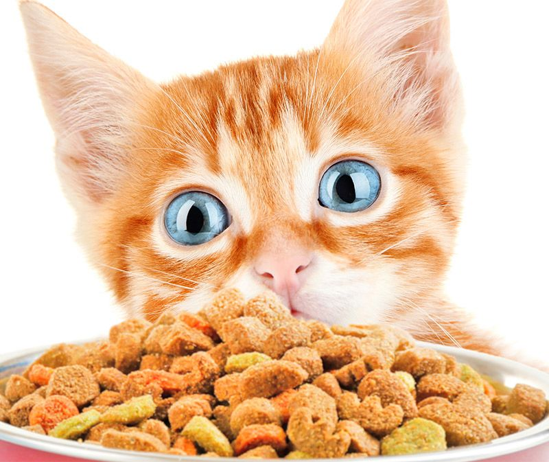 Best Dry Kitten Food Different Brands And Types Kitten Food Kitten Food Brands Kitten