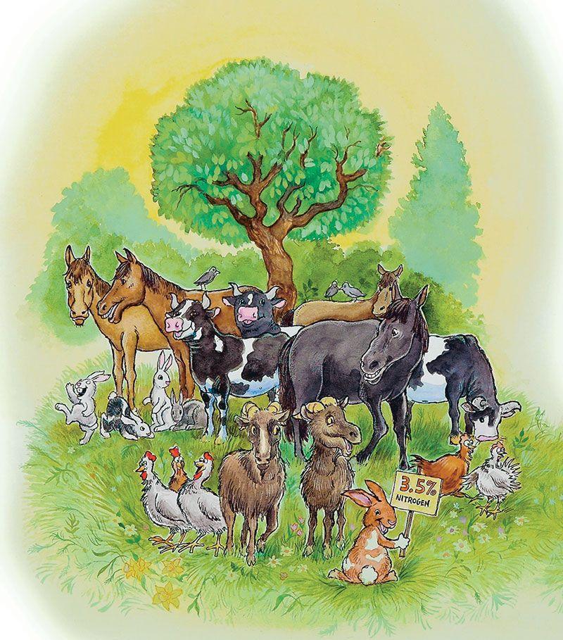 486dda8e7769d3889d0b60728ed4518e - Is Sheep Manure Good For Vegetable Gardens