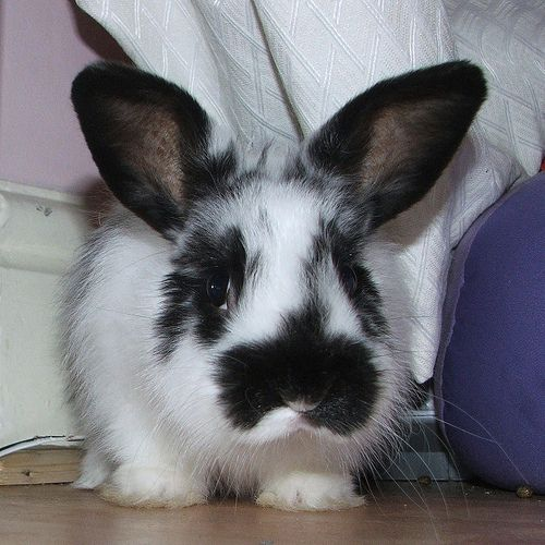 I Cannot Wait To Get A Bunny With Carl Next Year Oh My God Pet Bunny Rabbits Pet Bunny Pet Rabbit