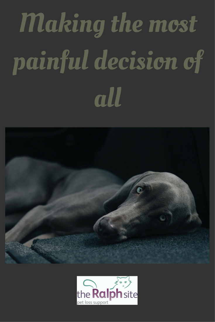 Pet Euthanasia Making The Most Painful Decision Of All Pets Dogs Cats Petloss Rainbowbridge Pet Loss