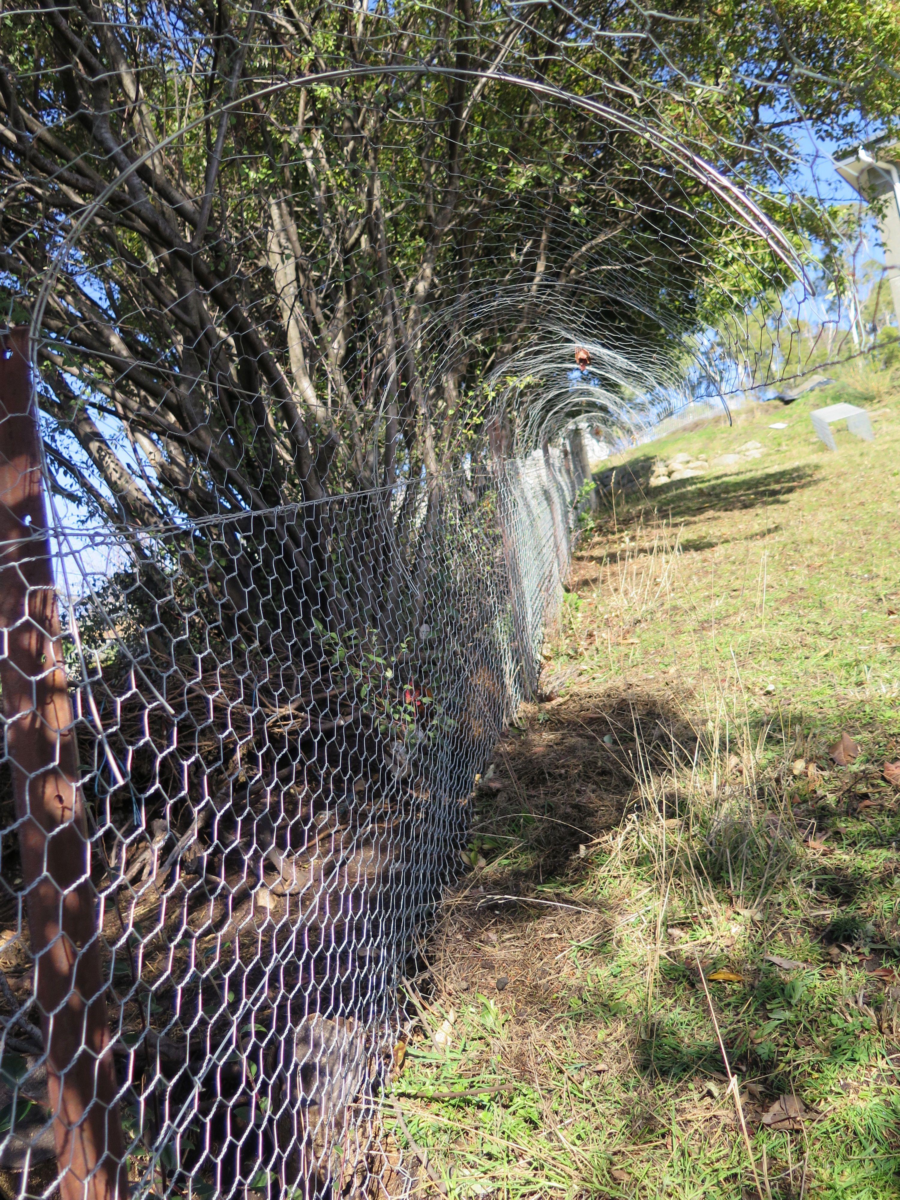 Possum proof fence | Pest proof garden | Pinterest | Fences, Garden ...
