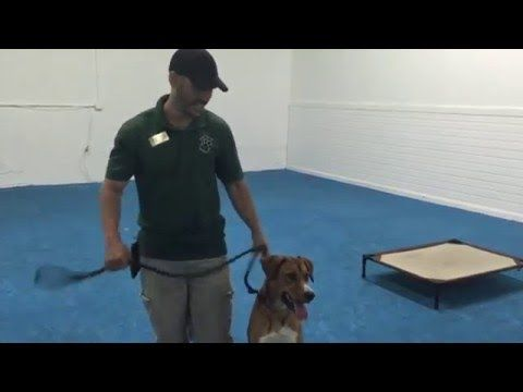 Applause Your Paws Inc Youtube Shelter Dogs Dog Training Pets