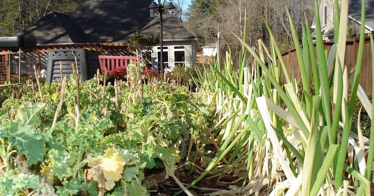 The beautiful flourishing summer garden is now a winter garden ...