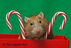 christmas rat - Cerca con Google