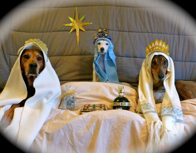 Pin by Heather on Stuff I love Christmas dog, Holiday
