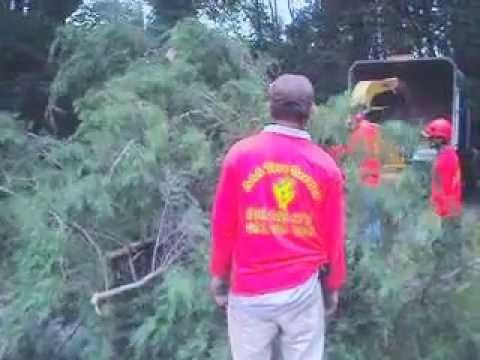 Long Island Best Tree Service Top Tree Removal In Nassau County Ny Tree Service Nassau County Nassau