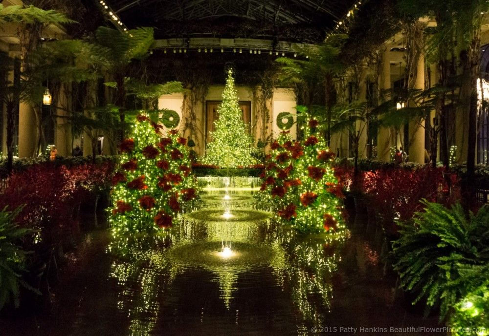 Christmas in the Exhibition Hall, Longwood Gardens © 2015 Patty ...