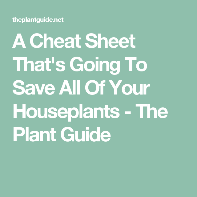 a cheat sheet thatu0027s going to save all of your houseplants the plant guide