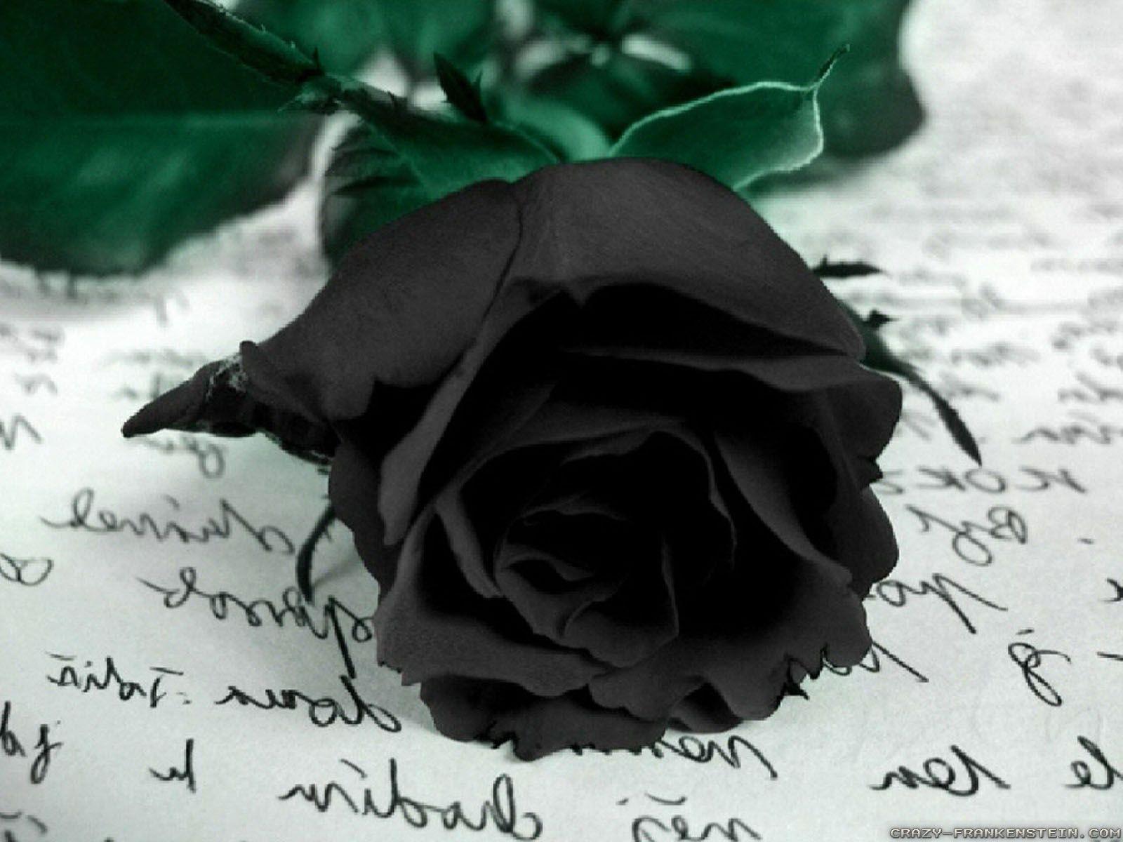 My black roses wall mural photo wallpaper photowall 16001200 black my black roses wall mural photo wallpaper photowall 16001200 black rose wallpaper 47 wallpapers adorable wallpapers izmirmasajfo