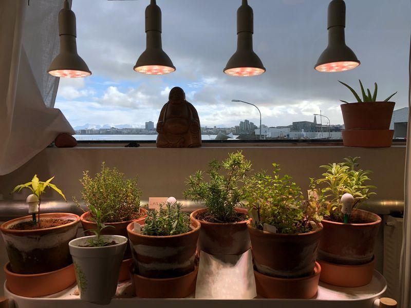 The 8 Best Grow Lights Of 2019 Indoor Gardening In