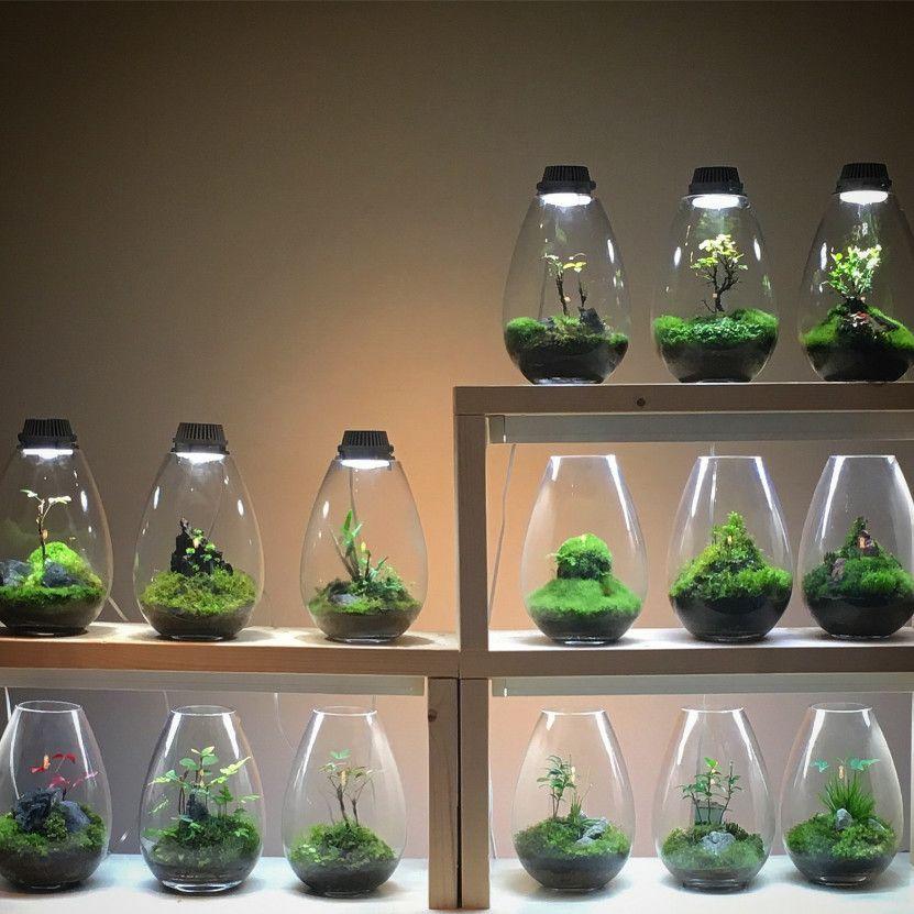 コケ植物とLED照明器具で、癒やされるインテリア空間を演出し楽しんでいます。