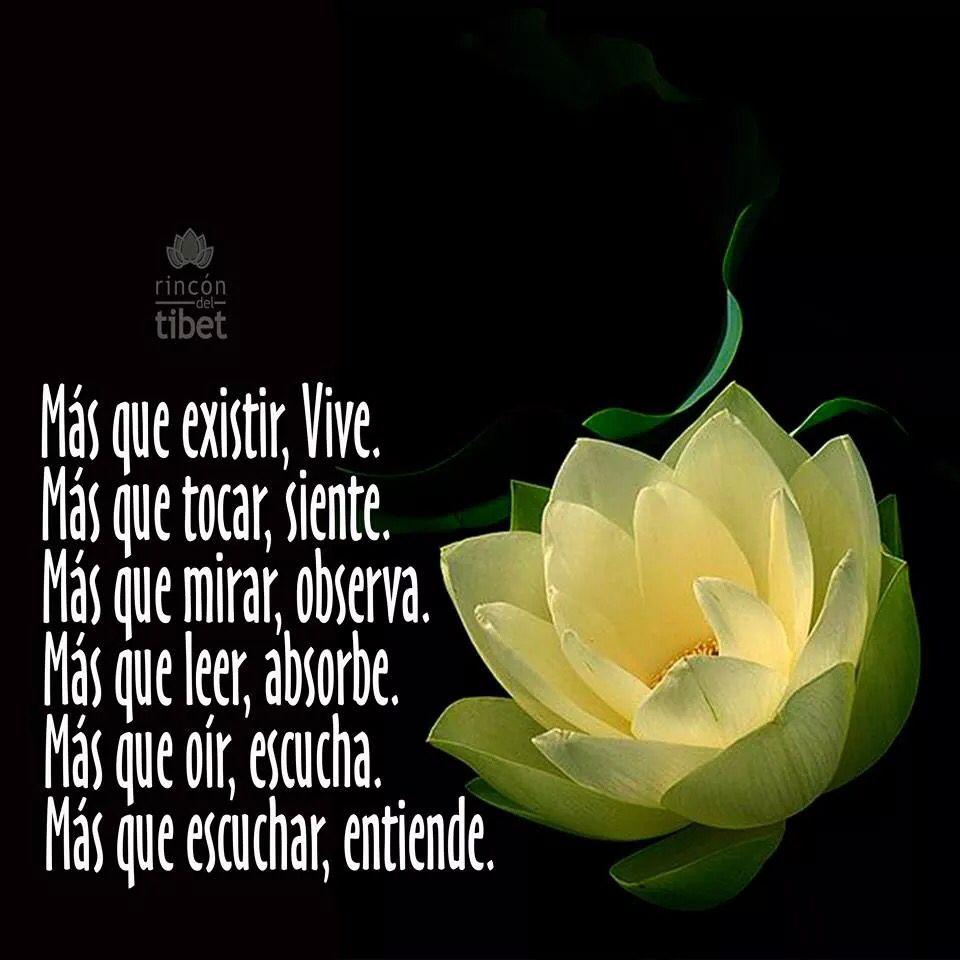 Vive *@