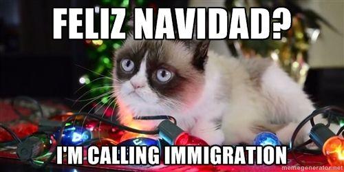 Feliz Navidad I M Calling Immigration G Cat Ch Grumpy Cat Humor Grumpy Cat Funny Cats