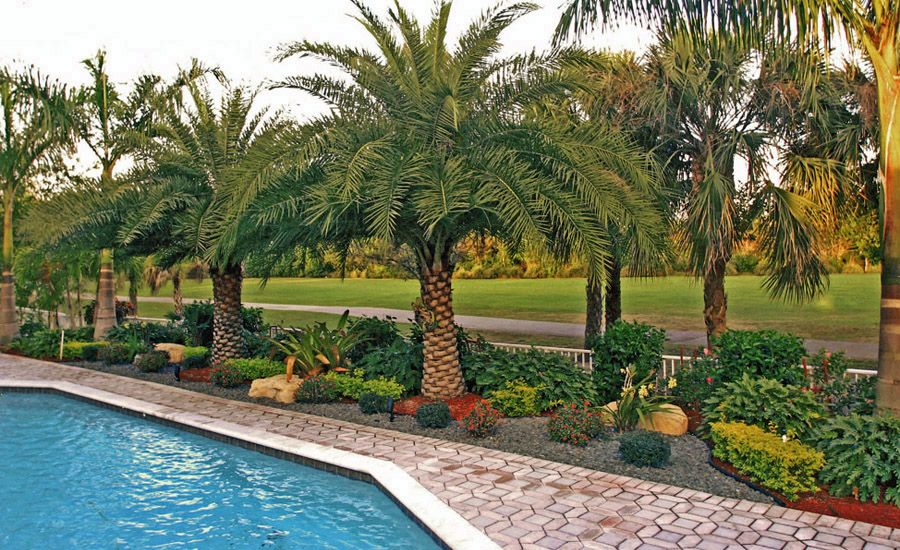 Landscaping with palms grand palms project gallery Florida landscape design ideas