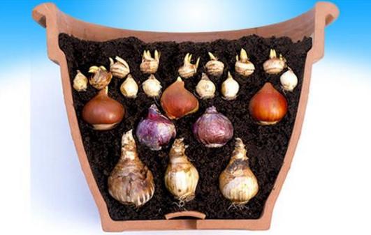 5 façons de planter ses bulbes à fleurs | Bulbe fleur, Bulbes et Planter des bulbes