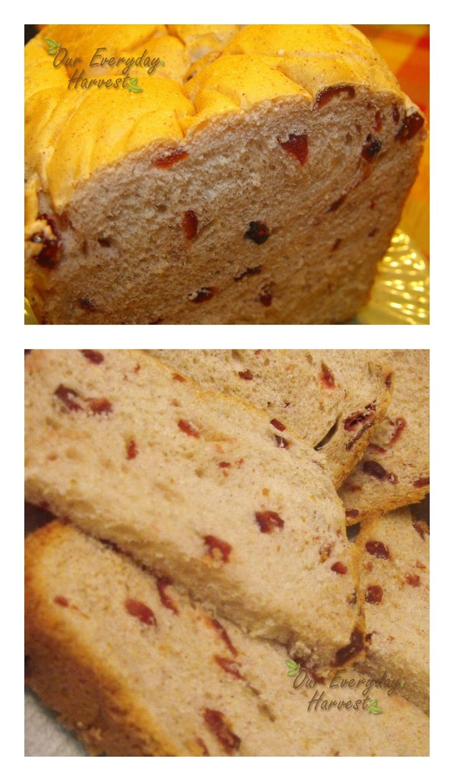 Cinnamon Craisin Bread {Bread Maker Recipe} | Our Everyday Harvest - Family Blog, Reviews, Giveaways, Frugal Tips, Recipes...