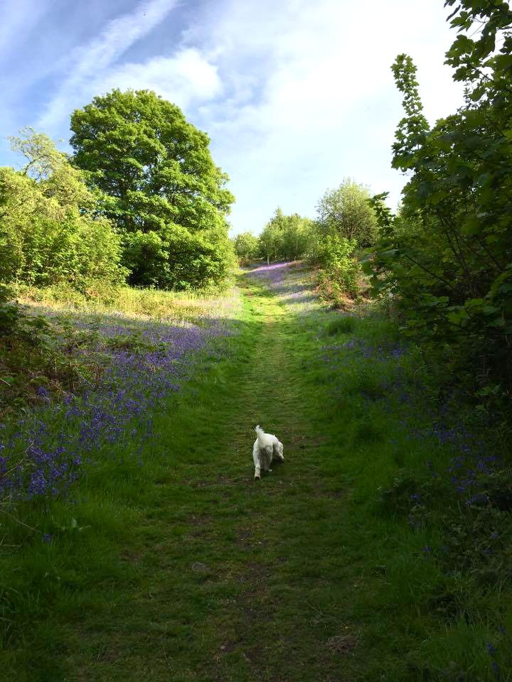 Brooks country house review a cosy dogfriendly country