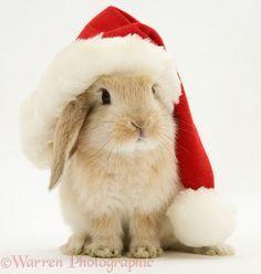 Christmas Bunny Dog Christmas Pictures Cute Baby Bunnies Christmas Bunny