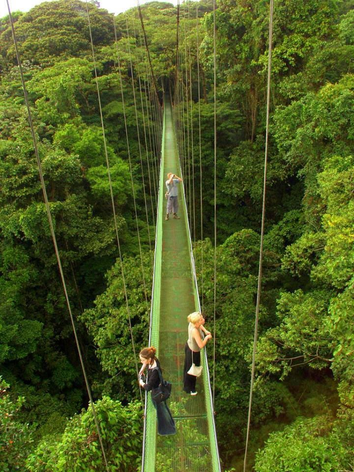 Canopy walkways above the Monteverde Rainforest Costa