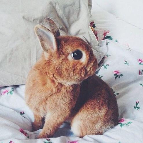 oh bunny oh bunny oh bunny!
