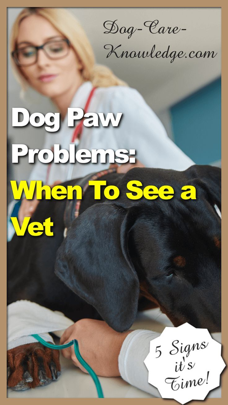Dog paw problems 5 amazing tips on how to protect keep