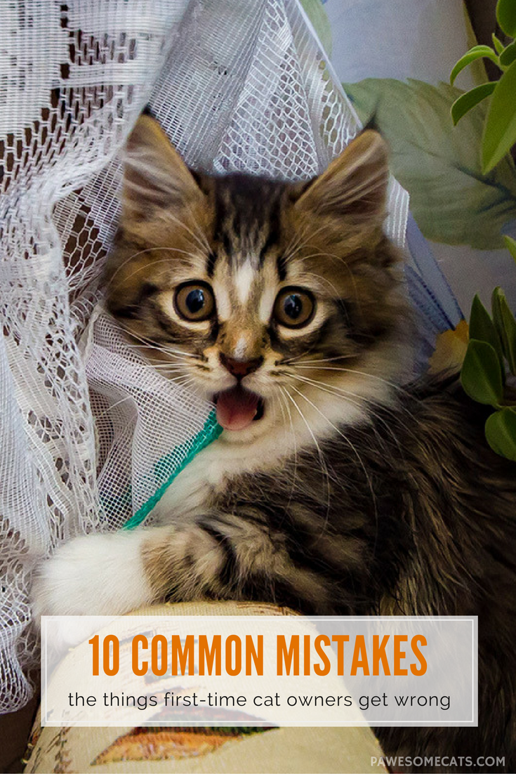 10 Common Mistakes Of First Time Cat Owners First Time Cat Owner Cat Care Cat Owners