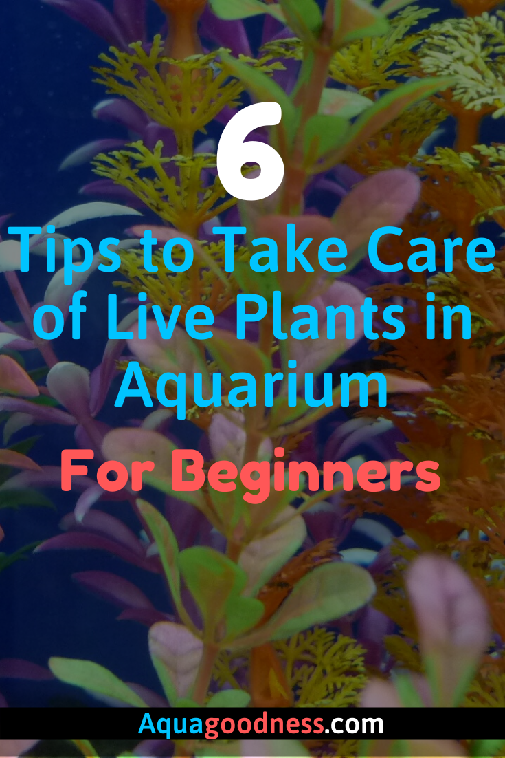 Looking for aquarium plant care tips. Well, I got you ...
