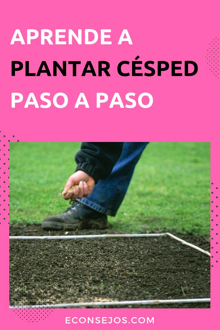 Aprende a plantar césped paso a paso