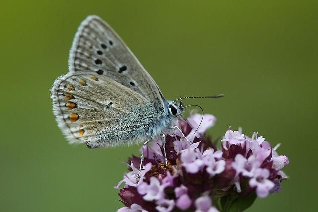 This is the last week to join the #BigButterflyCount with @savebutterflies http://goo.gl/yyE2M6