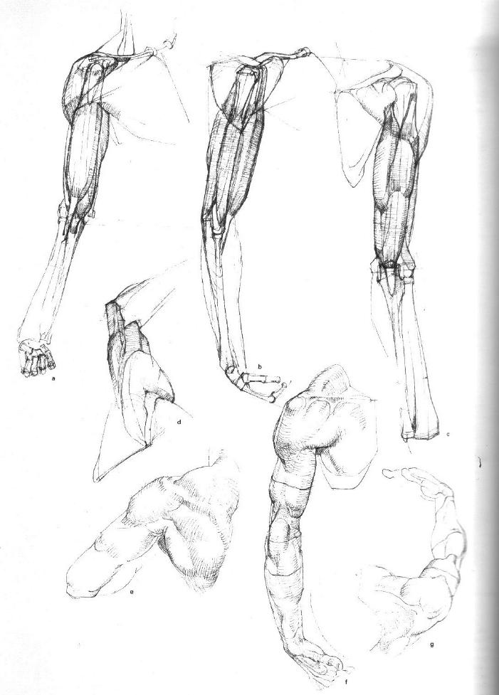 Gottfried Bammes - Der Nackte Mensch | Anatomy | Pinterest | Anatomy