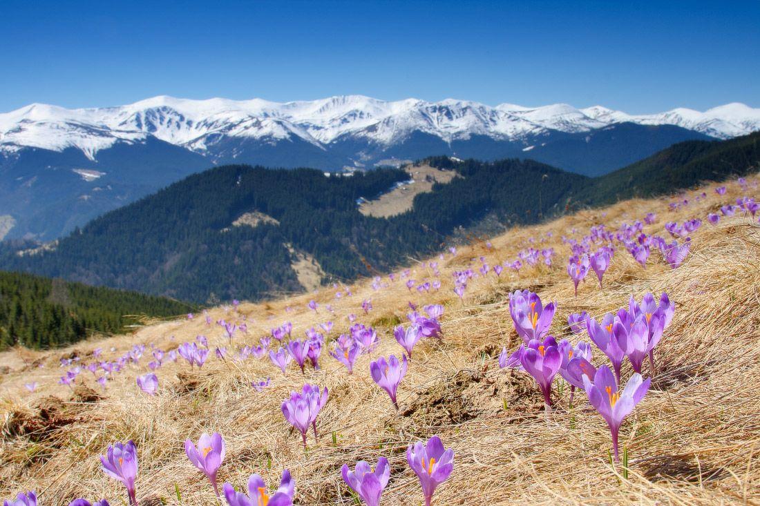 7 туристичних місць в Україні, які розквітають весною   ВСВІТІ — все, що тебе вражає!