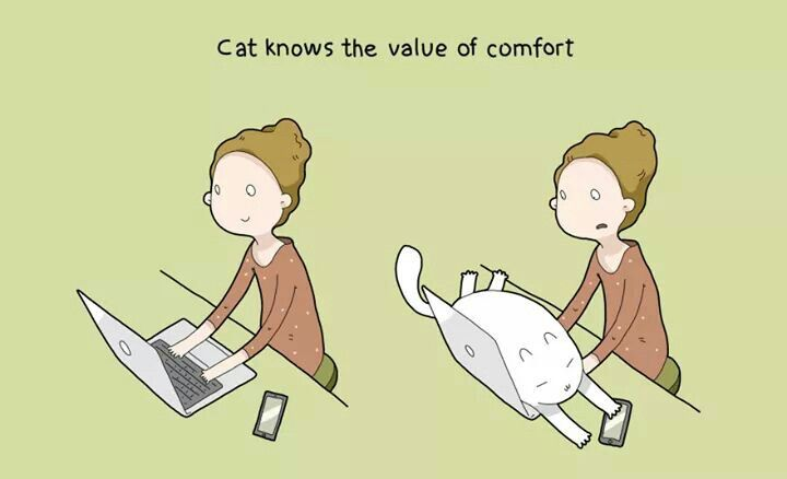 Cat knows the value of comfort