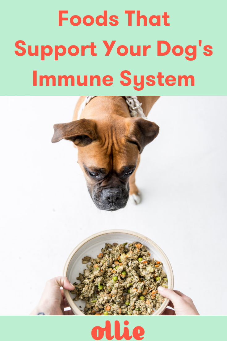 Immune Boosting Foods for Dogs Dog food recipes, Healthy