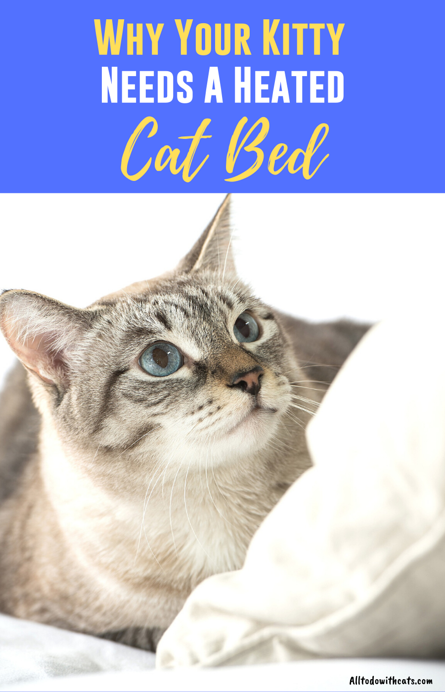 What Are The Best Heated Cat Beds? Heated cat bed, Diy