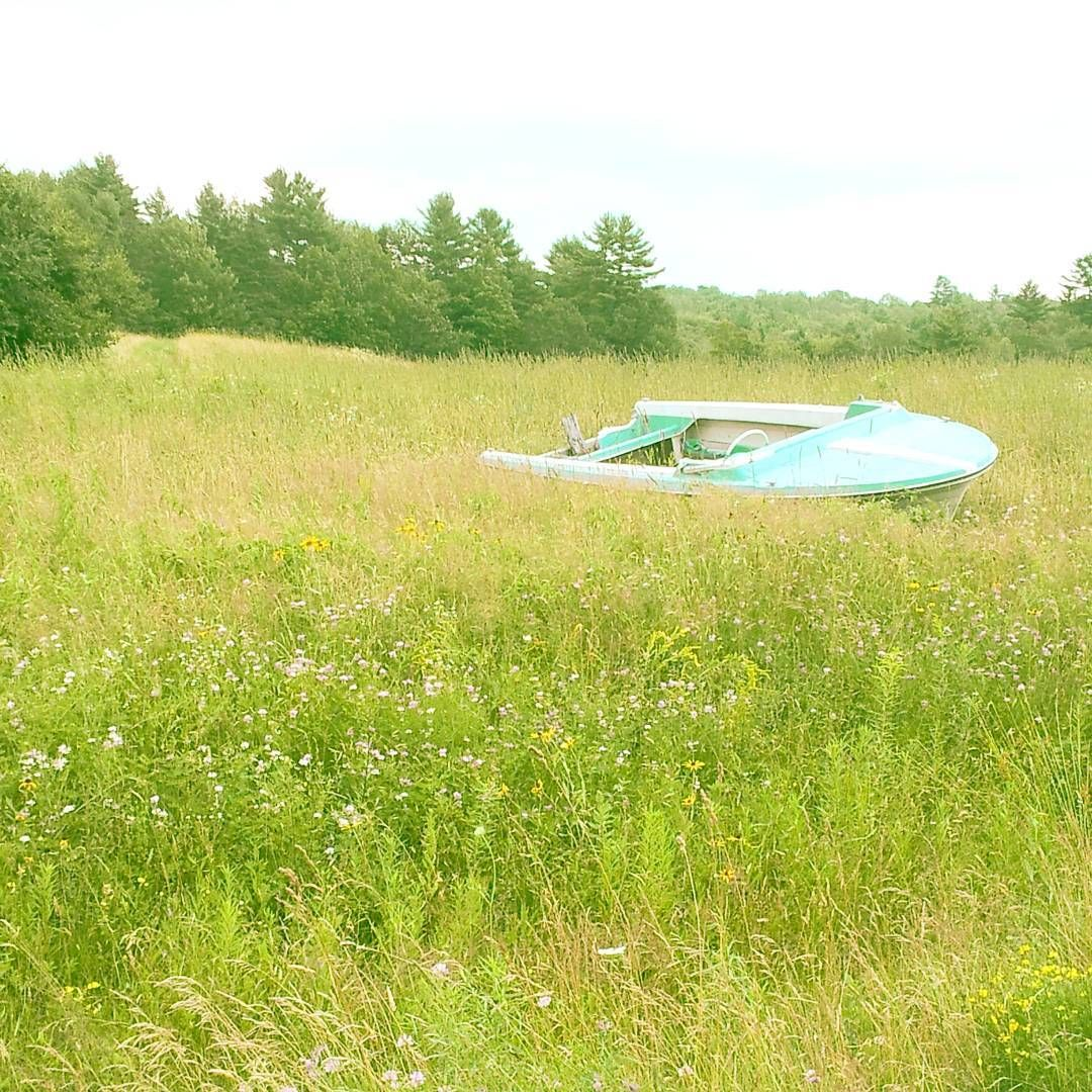 afloat in a field | scenes from summer