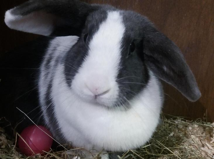 Bunny Find A Pet Rspca Org Uk Pet Bunny Rehome Dog Bunny