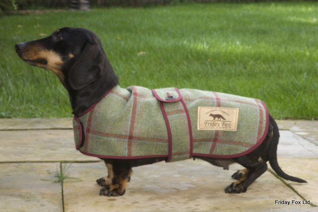 Our Tweed Miniature Dachshund Coat Is Made From Beautiful