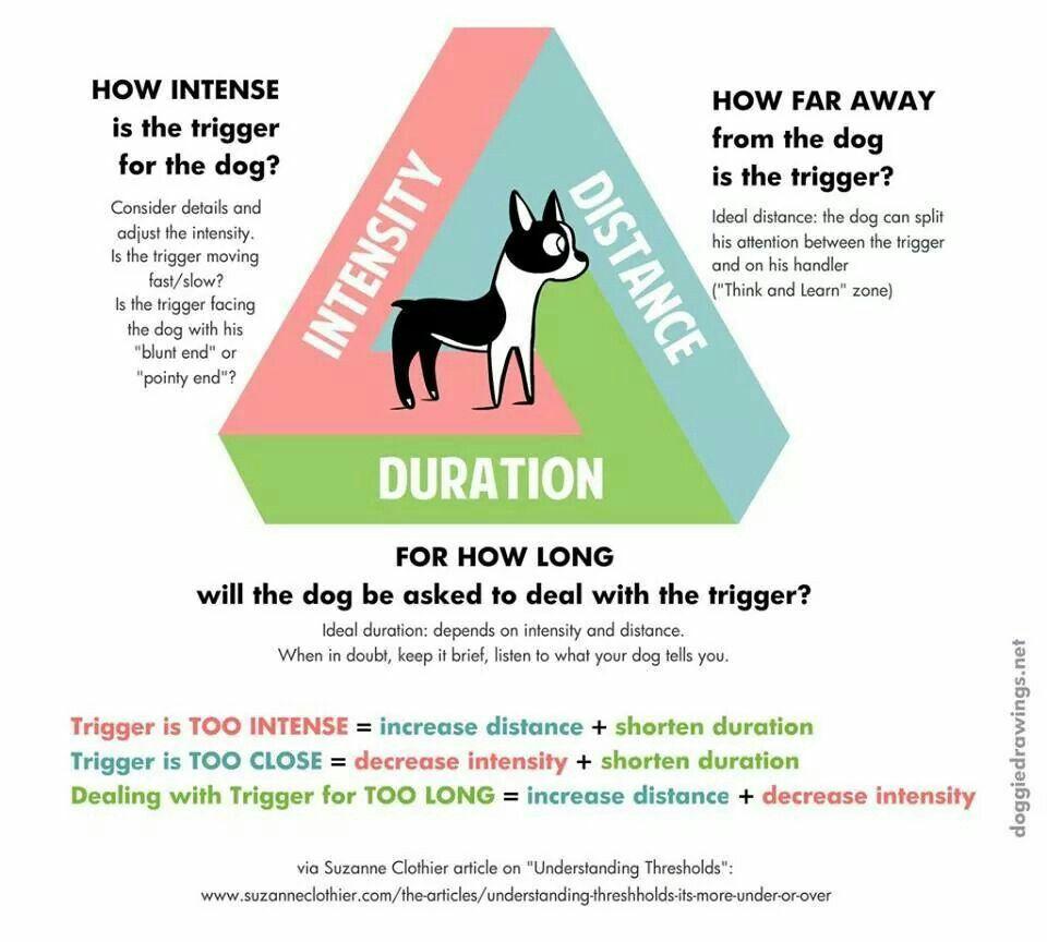 Intensity Of A Trigger Dog Training Tools Dog Biting Training