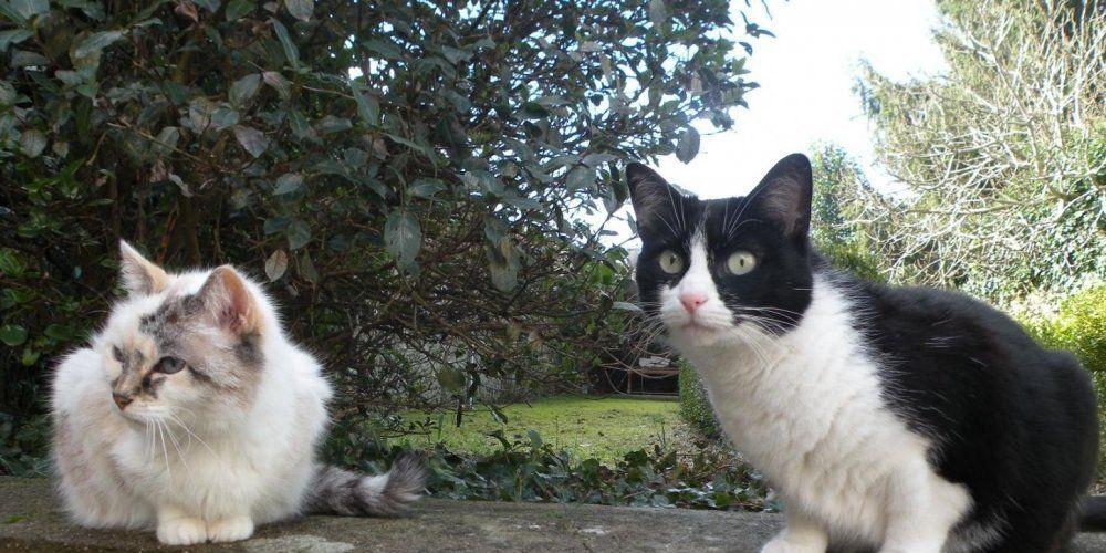 Les chats errants non stérilisés prolifèrent, mais propagent également des maladies.