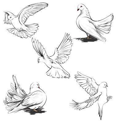 art illustrations-bild von wynne mcgrath | taube zeichnung