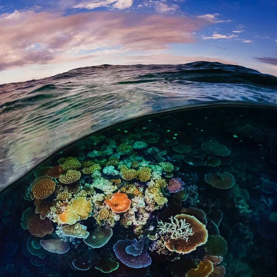 A Gallery Of Life On The Great Barrier Reef The Late