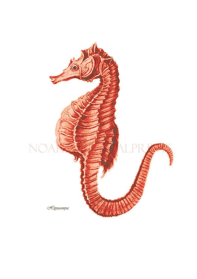 Seahorse print. Red Coral Seahorse Print Coastal Home Decor Wall Art ...