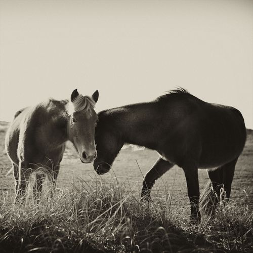 The wild horses near my home on the #Currituck #OBX photographed by Arden Ward Upton