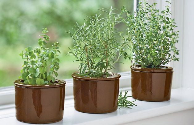 5 Best Windowsill Herbs Planting Herbs Indoor Herb 400 x 300