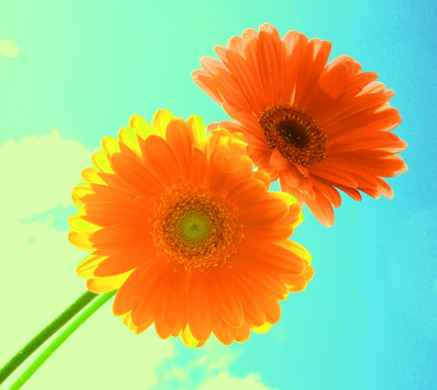 Beautiful Whatsapp Dp For Sunset Flower Images Flower Images Flowers Flower Photos