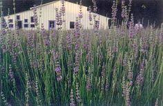 Lavender Hill Farm Winery Travel And Tourism Oklahoma Winery Oklahoma Travel