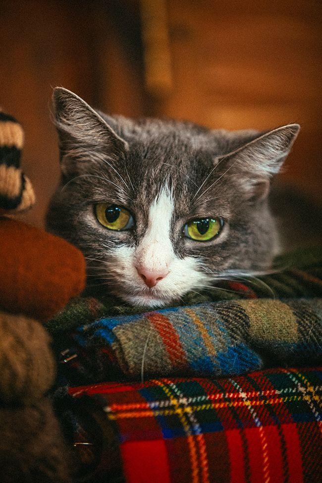 Abrigos para gatitos