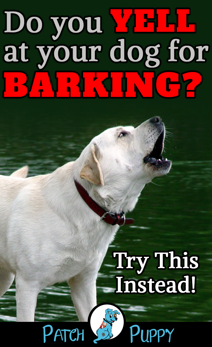 How To Control Excessive Barking Train Your Dog Not To Bark Dog Barking At Night Dog Training Dogs