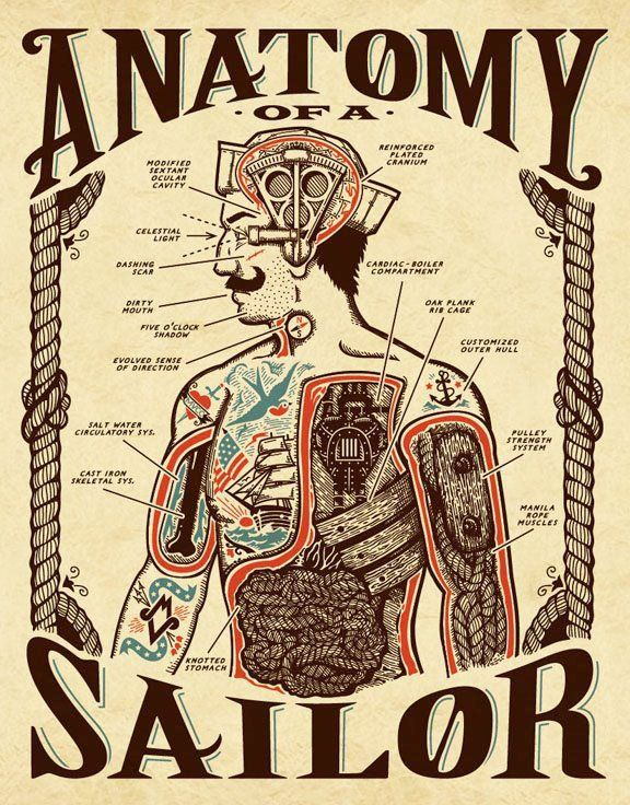 Anatomy of a sailor.